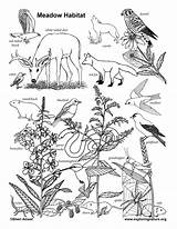 Coloring Meadow Habitat Nature Exploringnature sketch template