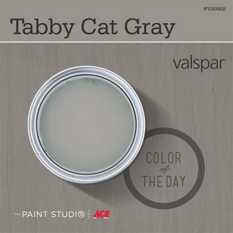 valspar neutral paint colors simple tabby cat gray from a second chance for secondhand a guide to giving used