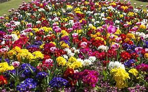Garten Blumen Bilder : bilder tulpen garten blumen schl sselblumen viel ~ Whattoseeinmadrid.com Haus und Dekorationen