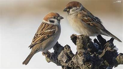 Birds Trunk Sparrows Trees Cars Wallpapers Kochanyurwis