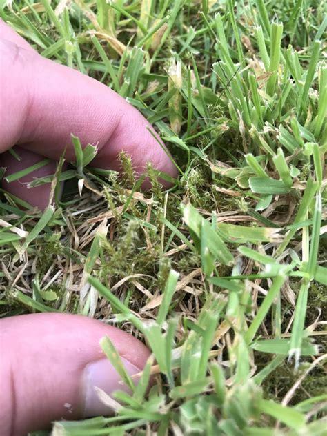 Moos Im Rasen Bekaempfen by So Bek 228 Mpfen Sie Moos Im Rasen Tipps Und Vorbeugema 223 Nahmen