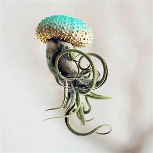 Whimsical jellyfish air plants are not only easy to care