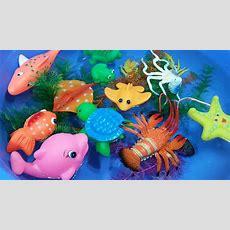 Learn Sea Animals Names Ocean Animal Toy Videos For Kids  Littlebabytv Youtube