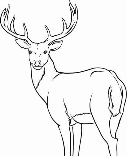 Deer Antlers Drawing Coloring Pages Getdrawings