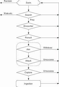 Flow Chart Of Predation Steps Shown By An Ambush Predator