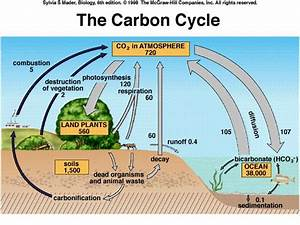 Google Images Carbon Cycle