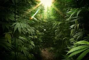 , weed, drugs, ,cool images, laptop,marijuana, high ...