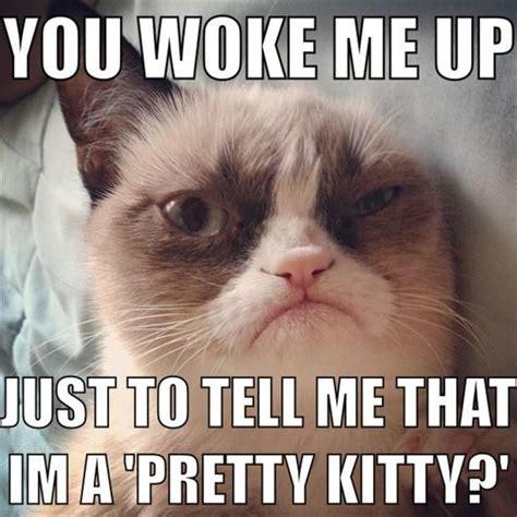 The Best Of Grumpy Cat - 70 Pics