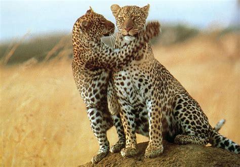Kenya Safari: A Guide To Going On Safari In Kenya