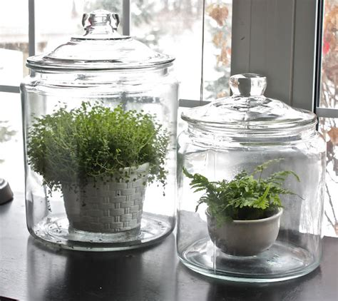 simple glass jars  family ceo