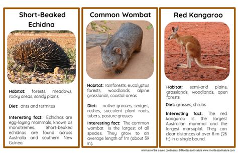 animals    continents nomenclature