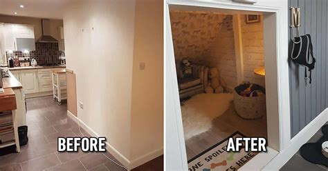 dog owners build  luxury dog room  finding