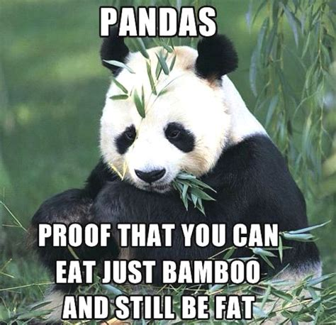 Cute Panda Memes - 15 cutest panda memes which ruled the internet viral slacker