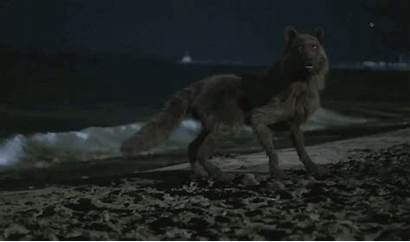 Wolf Twilight Pack Aesthetic Fantasy Hybrid Anime