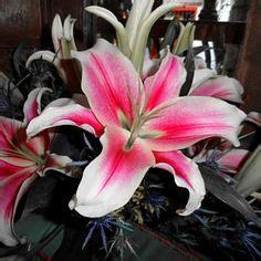 Cataleya Flower Tattoo Millenia Style