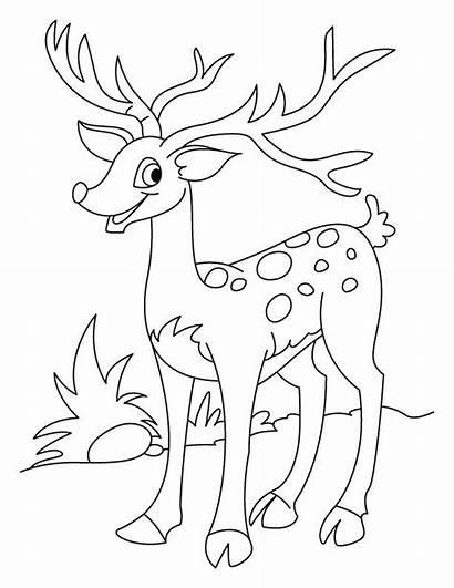 Deer Coloring Pages Flower