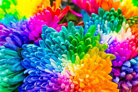flower color top 60 multi colored background stock photos pictures