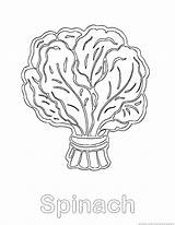 Spinach Coloring Pages Template Vegetable Sketch 123coloringpages sketch template
