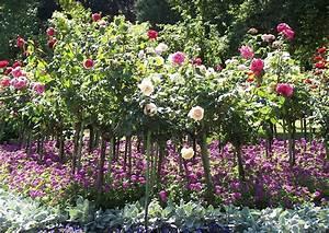 Begleitpflanzen Für Rosen : rosarium begleitpflanzungen und wintergestaltung ~ Orissabook.com Haus und Dekorationen