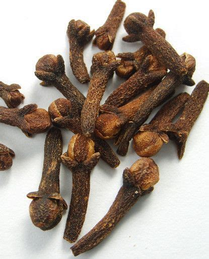 clove oil products cloves benefits healing herbs