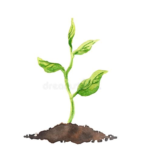 green plant  leaves growing  soil watercolor stock
