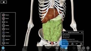 17 Best Images About Full Body Skeleton On Pinterest