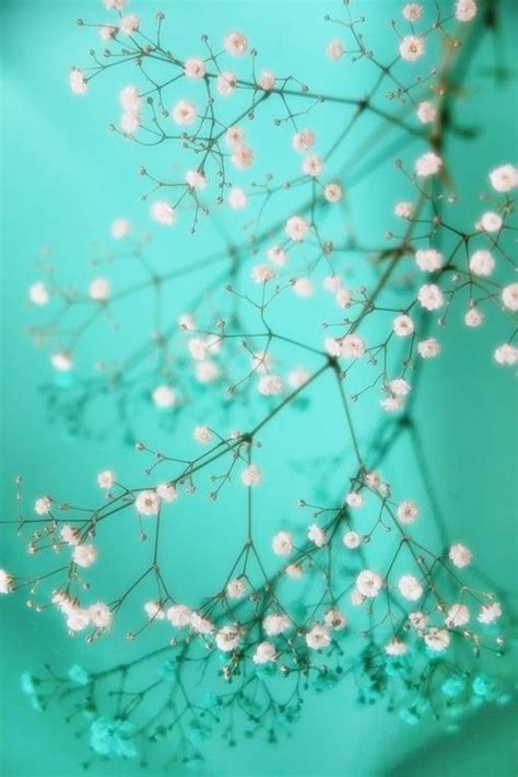 pin by on teal aesthetic turquoise