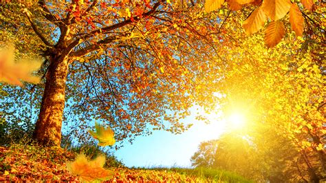 壁紙、1920x1080、秋、木、木の葉、自然、ダウンロード、写真