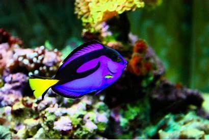 Fish Exotic Unique Posted Am
