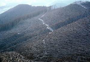 Mount St. Helens, 30 years ago - Photos - The Big Picture ...