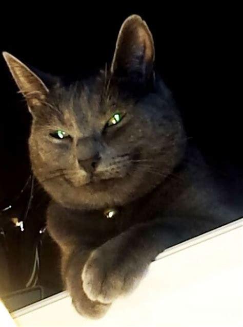 proof  cats   demons barnorama