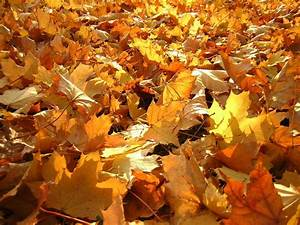 Beautiful Pictures Of Autumn Leaves