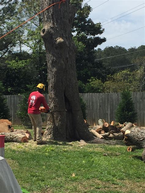 tree trimming service lawrenceville ga mg tree services