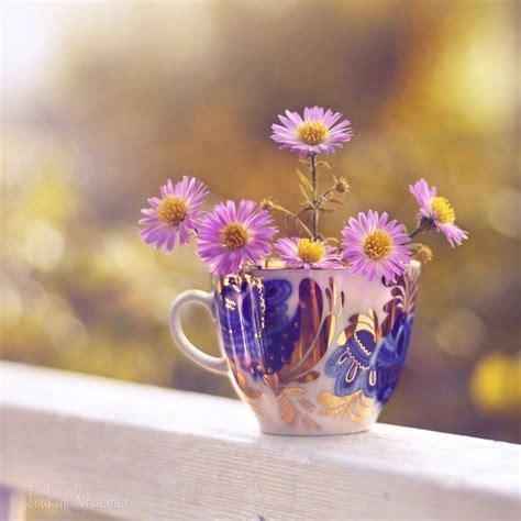 TOUCHING HEARTS: BEAUTIFUL FLOWERS   BEAUTIFUL IMAGES