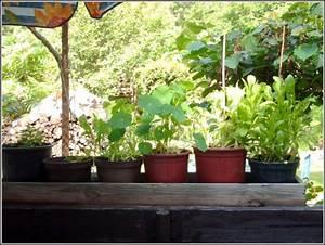 Welche Pflanzen Für Balkon : welche pflanzen auf dem balkon balkon house und dekor ~ Michelbontemps.com Haus und Dekorationen