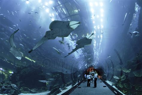 inside the dubai mall largest commercial center in the world the dubai mall aquarium with