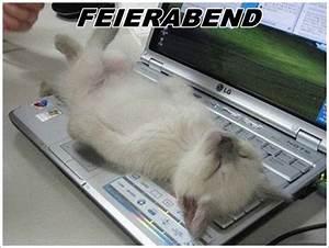 Feierabend Und Wochenende : endlich wochenende feierabend weekend lustiges pinterest katzen lustig und katzen bilder ~ Orissabook.com Haus und Dekorationen