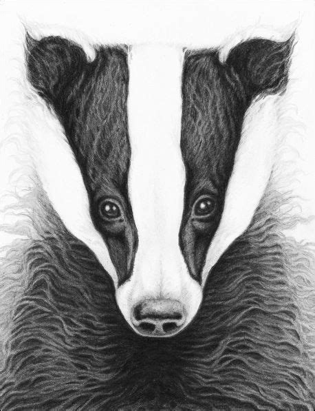 pappy gallery badger drawing pappy images tree