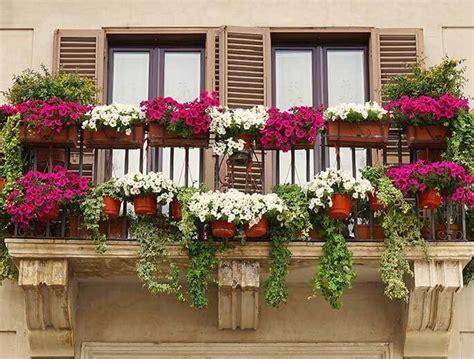 blumen für den balkon das themenportal silberherzen de