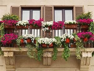 Blumen Für Den Balkon : das themenportal ~ Lizthompson.info Haus und Dekorationen
