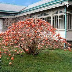 Oleander Draussen überwintern : oleander berwintert im freien oleander pinterest berwintern gefangen und drau en ~ Eleganceandgraceweddings.com Haus und Dekorationen