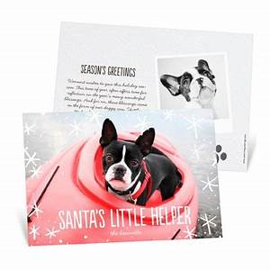 New Pet Christmas Cards