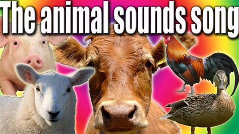 animal sounds song funny talking animals youtube