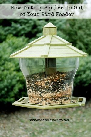 how to keep squirrels out of your garden how to keep squirrels out of your bird feeders bird