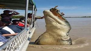 Top 5 World's Biggest Crocodiles in the World - YouTube