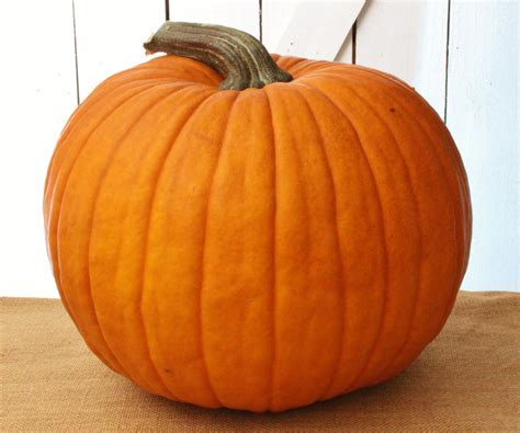 pumpkin the it begins with a perfect pumpkin the cavender diary