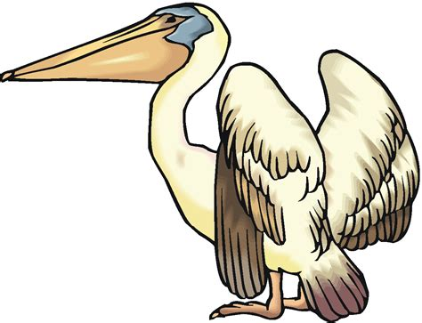 brown pelican clipart clipground