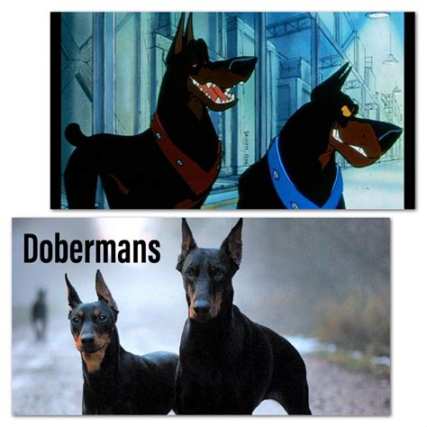 dog breeds   famous disney films