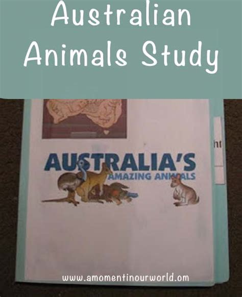 australian animals lapbook simple living creative learning
