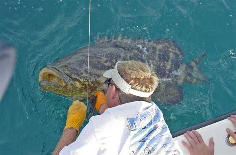 goliath grouper diver enrages hilarious